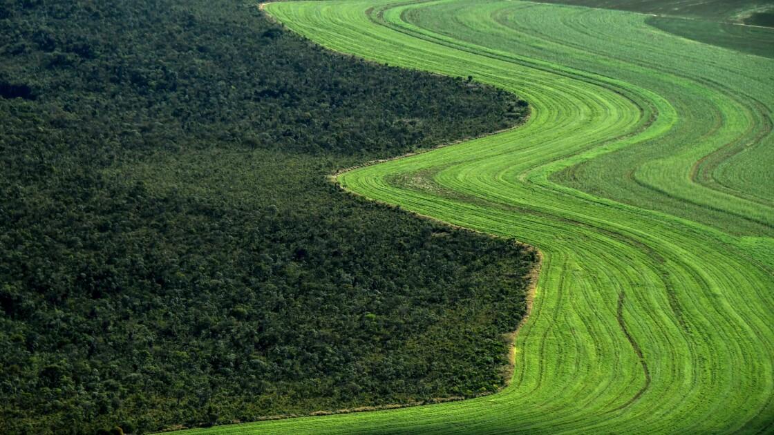 Accusé par Bolsonaro d'exagérer l'ampleur de la déforestation, il est limogé