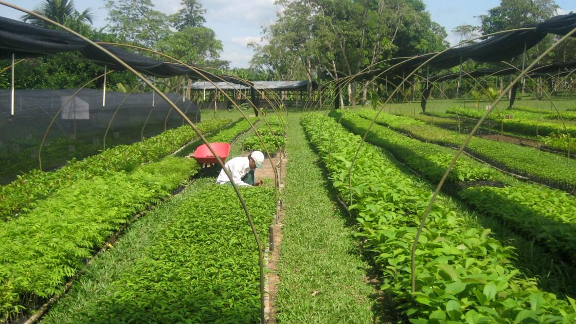Planter des arbres pour compenser son CO2: une solution pas si miraculeuse