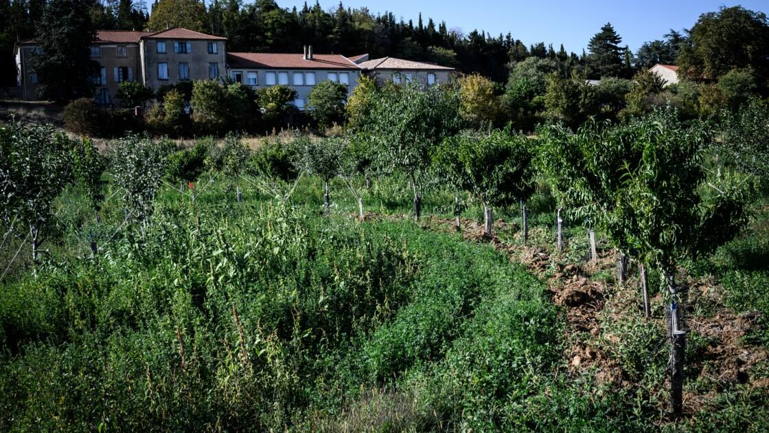 Dans la Drôme, l'intelligence des arbres au service de la production fruitière