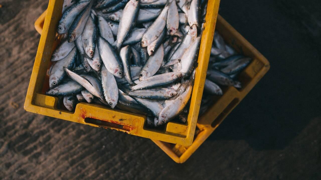 Quatorze pays s'engagent dans une vaste initiative pour protéger les océans