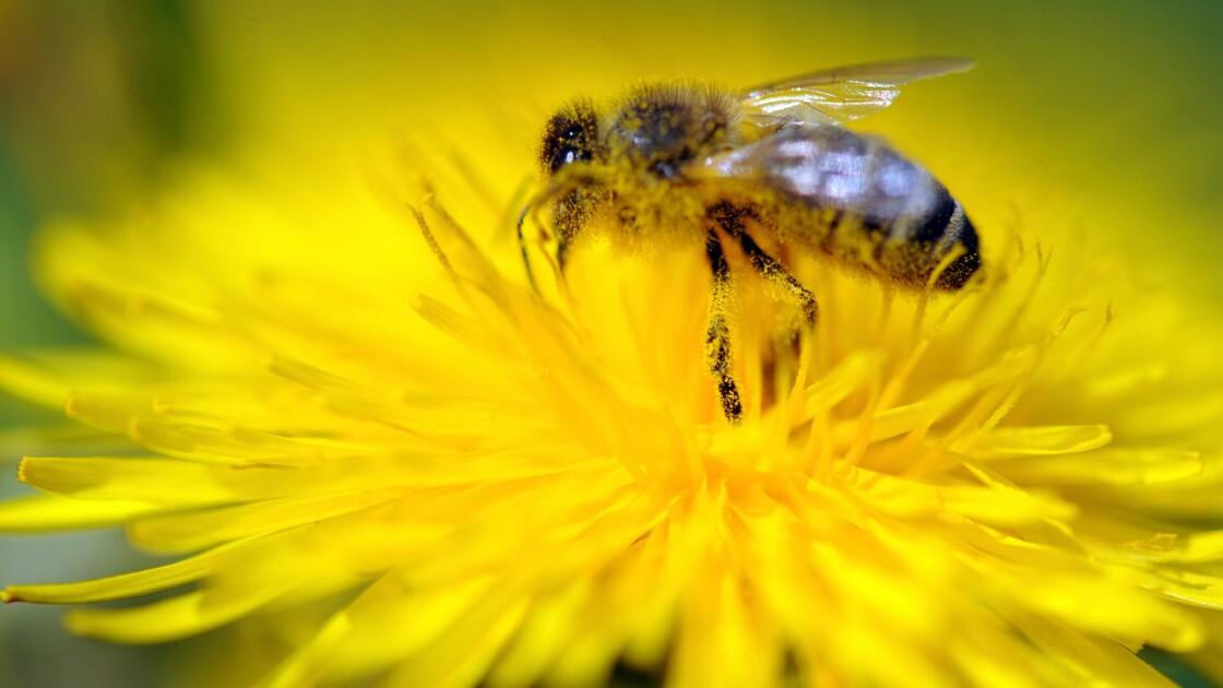 """Des apiculteurs bretons entament un """"convoi mortuaire"""" de ruches mortes"""
