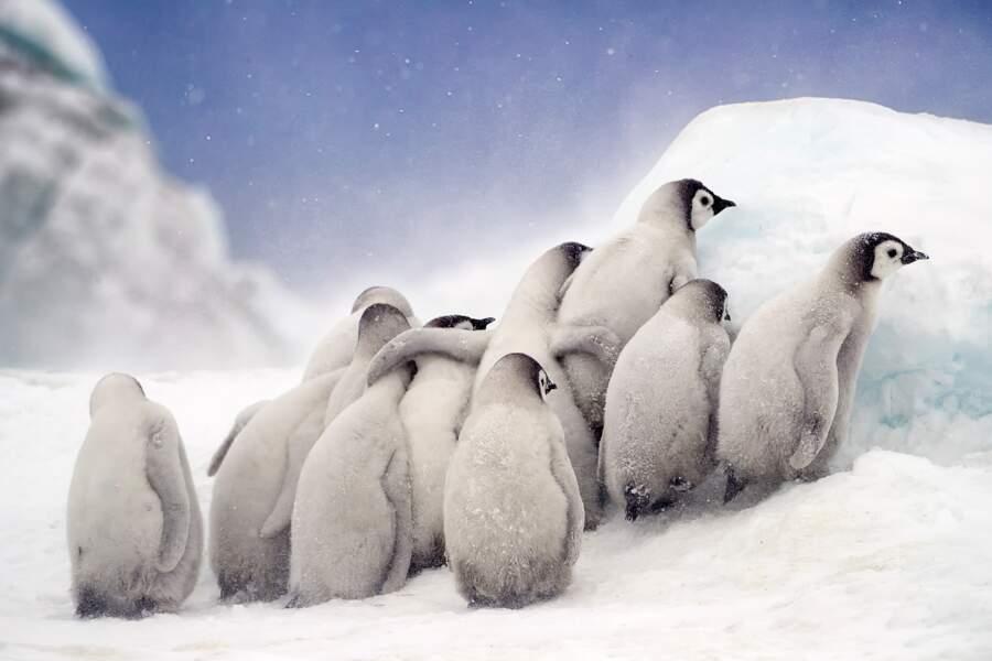 Bienvenue en Antarctique