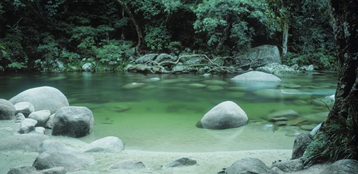 Parcourir la forêt de Daintree, un autre grand site Unesco