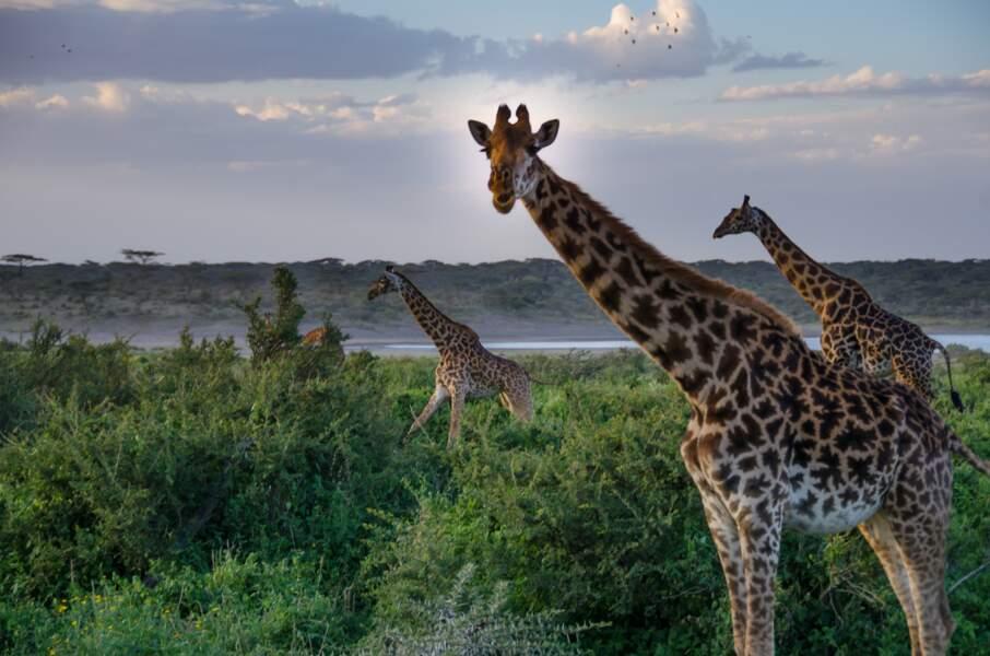Participer à un safari-photo en Tanzanie