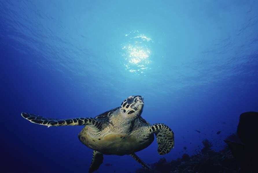 Faire du kayak dans la mer de Corail