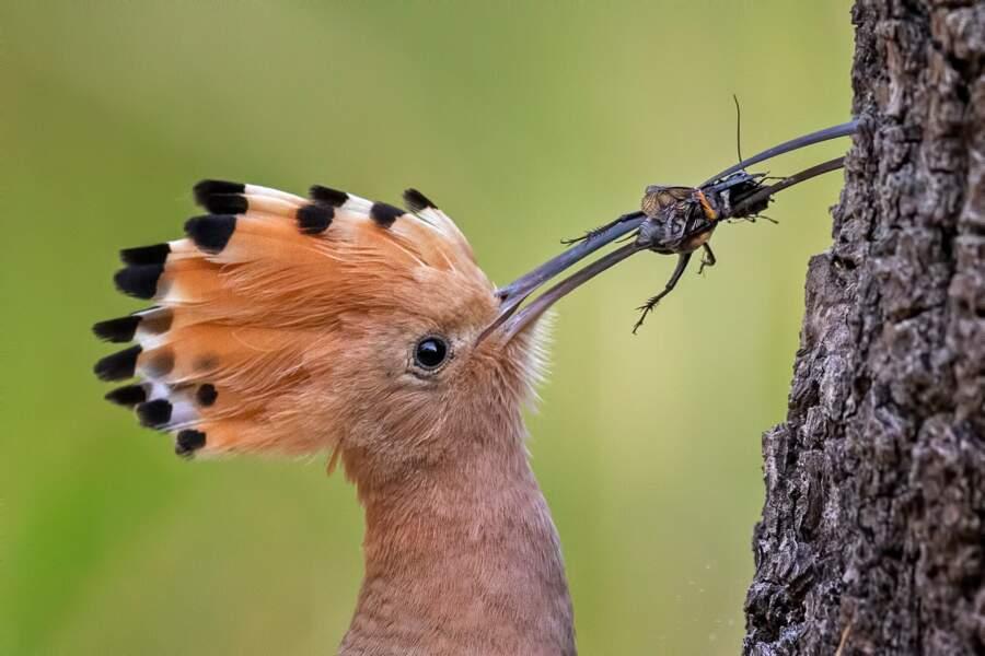 A la chasse aux insectes