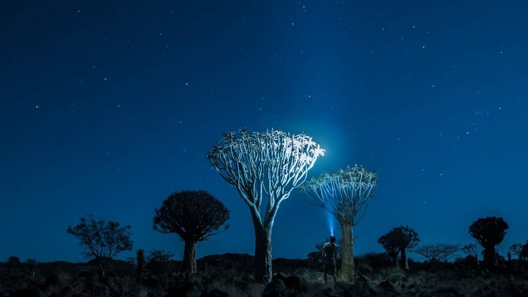 En Namibie, dans la Quiver tree Forest (forêt des arbres à carquois, Aloidendron dichotomum)