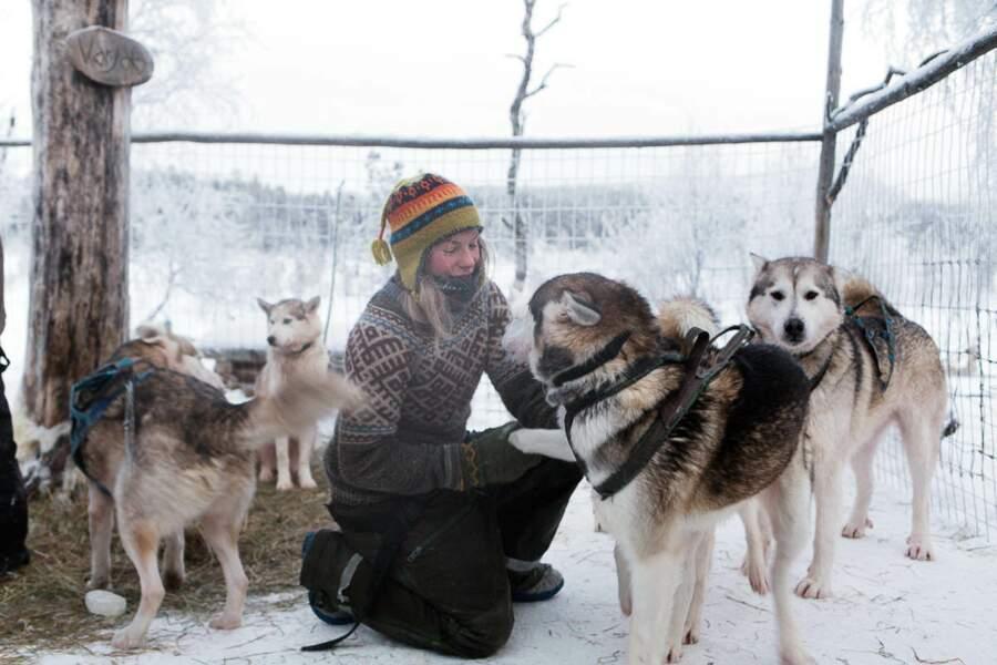 Tinja harnache ses huskies avant une expédition en pleine forêt