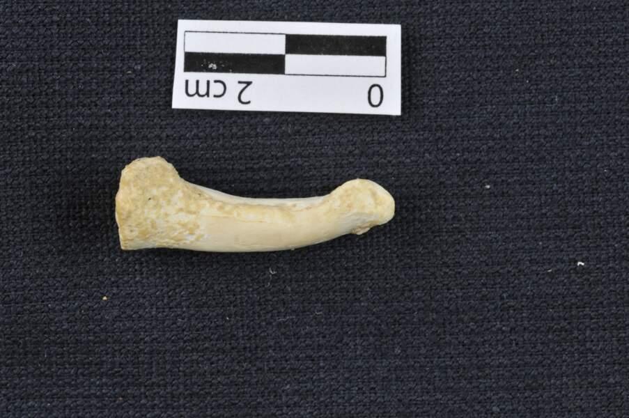 Vieux de 50.000 à 67.000 ans