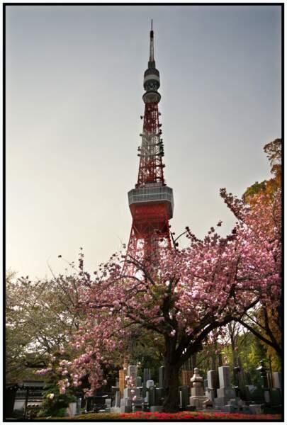 Tokyo tower, Minato, Tokyo