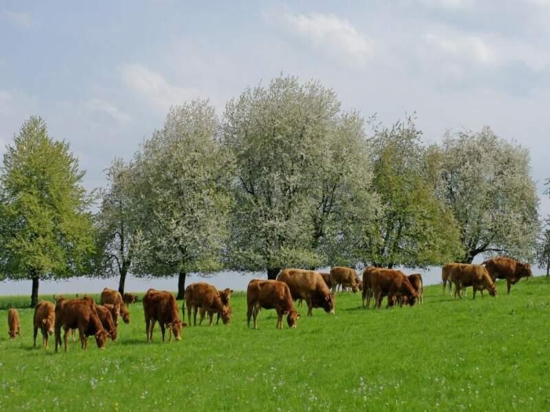 Diaporama n°5 : En Franche-Comté, la campagne au fil des saisons