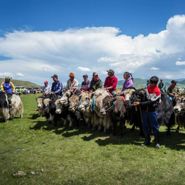 Le festival du yak dans la vallée de l'Orkhon