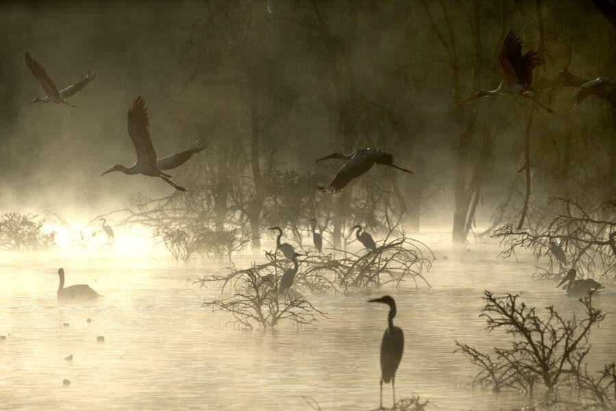 Le lac Naivasha est le paradis des ornithologues
