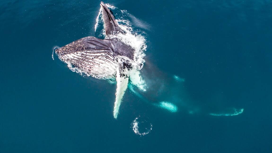 Instantané de photographe : Baleine à Bosse se nourrissant de krill par Florian Ledoux
