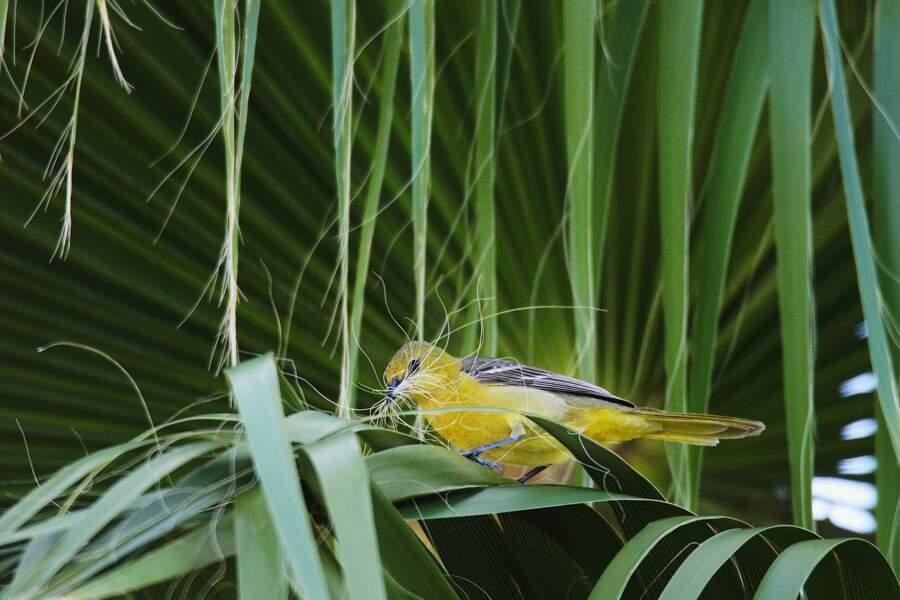 Des oiseaux et des palmiers