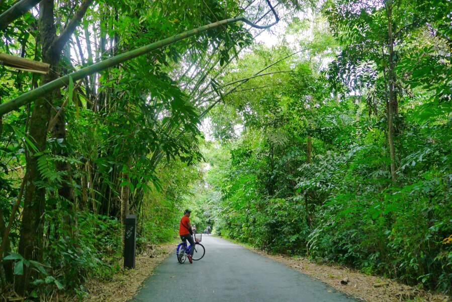 Pulau Ubin, une île tranquille au large de Singapour