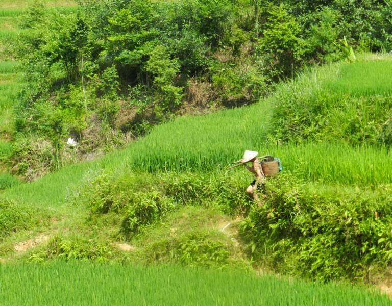 A travers les rizières, par Sarah Galtier / Communauté GEO