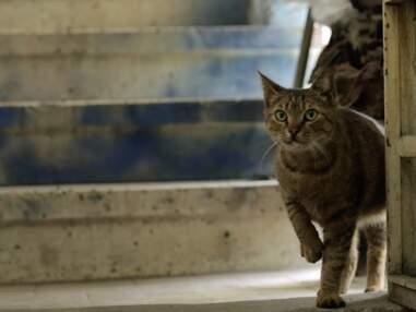 Les chats d'Istanbul à l'affiche de Kedi