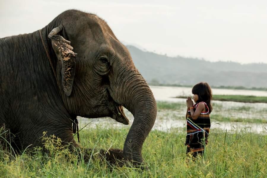 L'ethnie M'Nong aime les éléphants