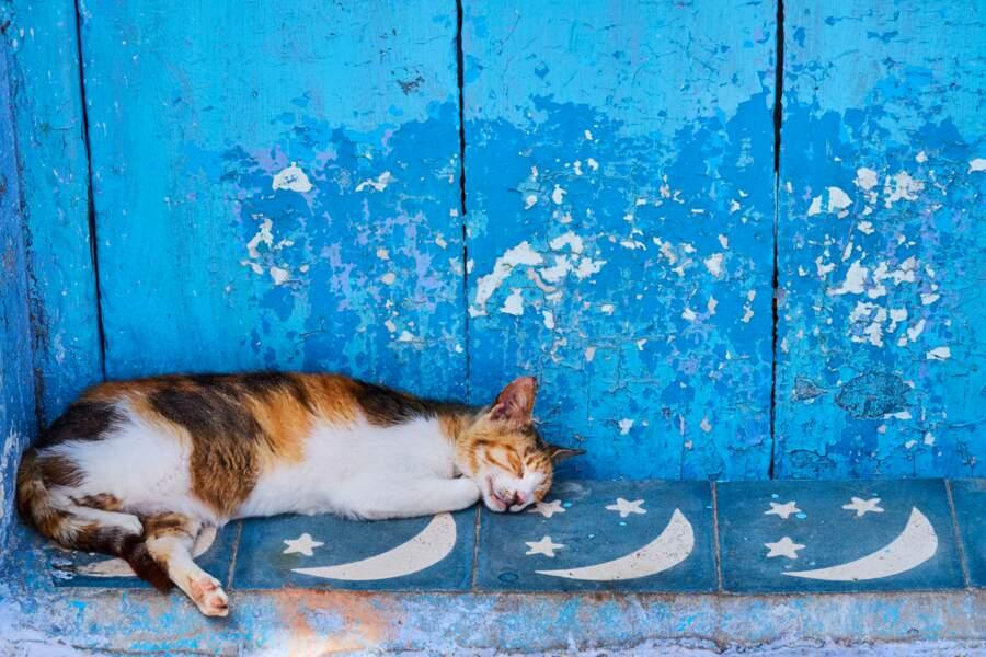 A Chefcha(t)ouen, ce rêve bleu…