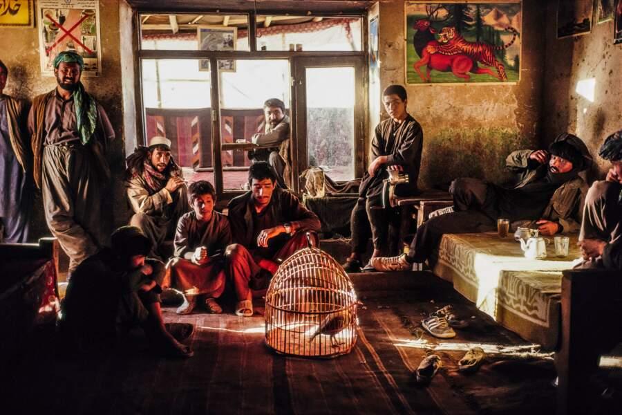 A Bamiyan, le chant des oiseaux