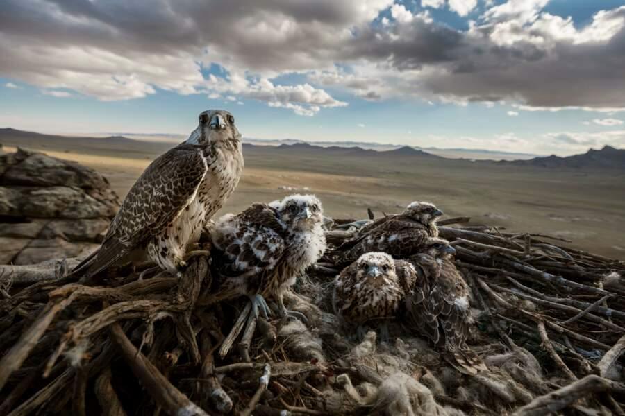Y a qu'à faucon – Premier prix catégorie nature (série)