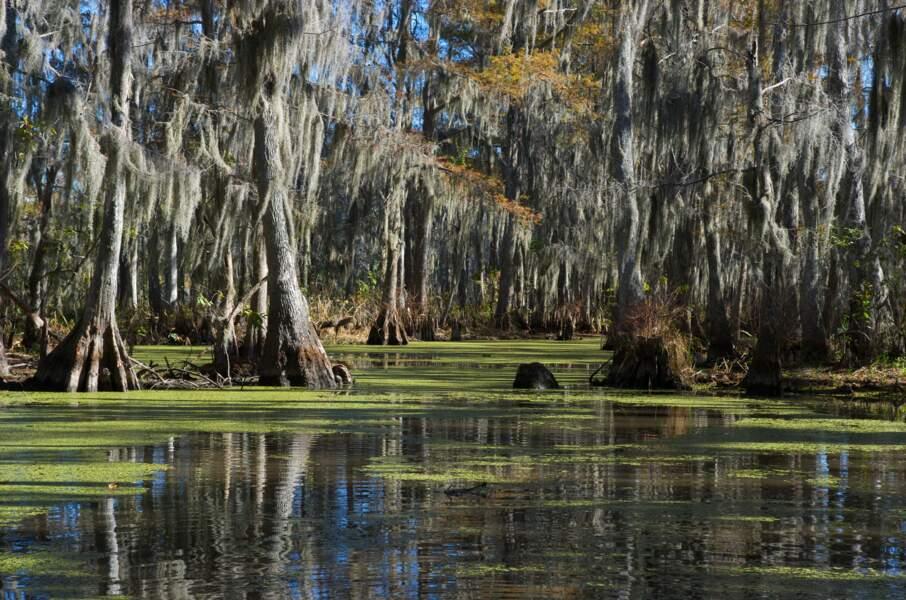 La Louisiane et ses bayous, États-Unis