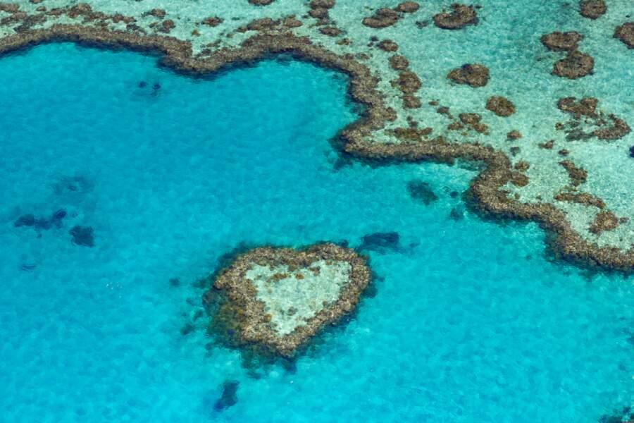 Le Heart Reef dans l'archipel des Whitsundays, Grande Barrière de corail, Australie