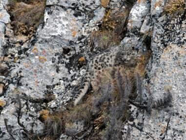Découvrez les panthères des neiges et les serpents l'exposition Argelès Photo Nature