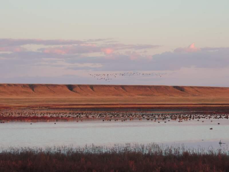 Les paysages de la Dauria, en Mongolie et en Russie