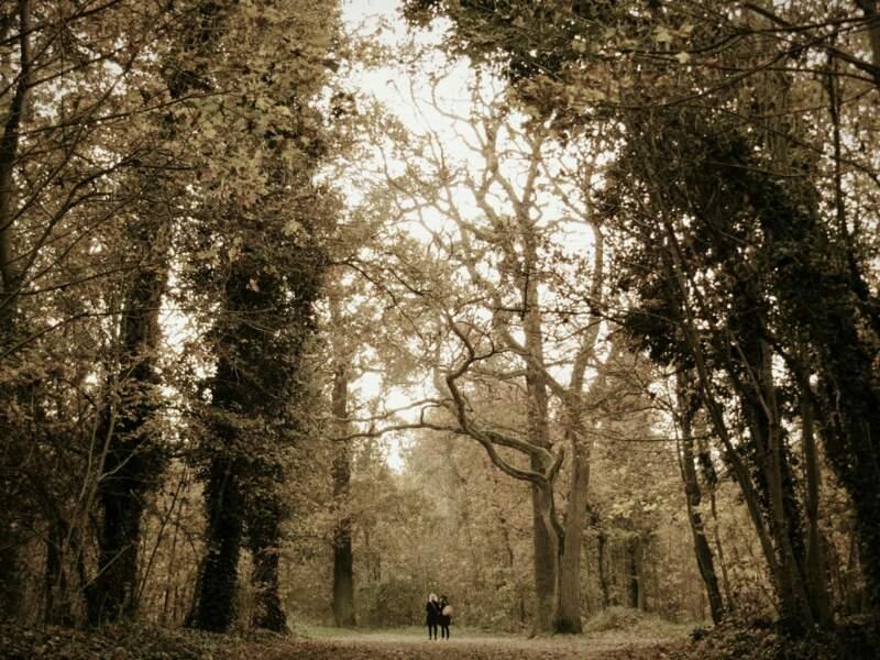 Le bois de Vincennes en automne