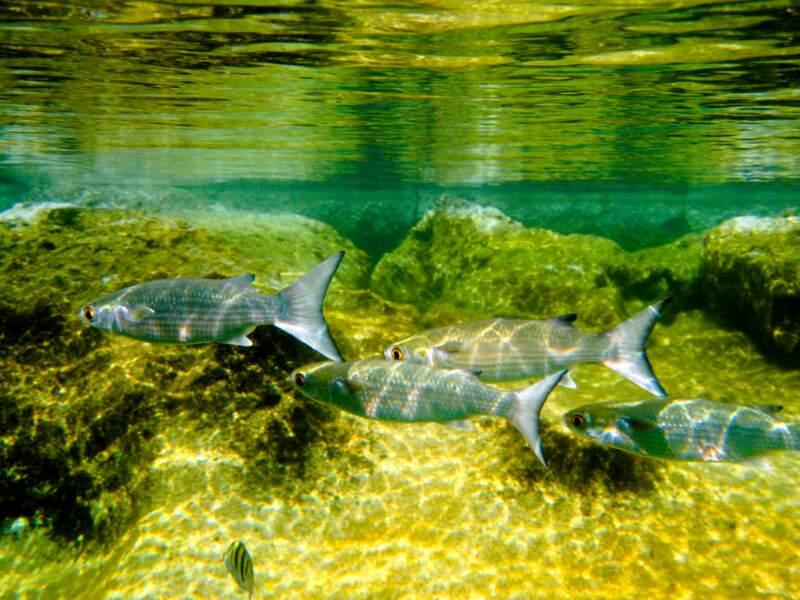 Le grand aquarium de Saint-Malo, pour une plongée en famille