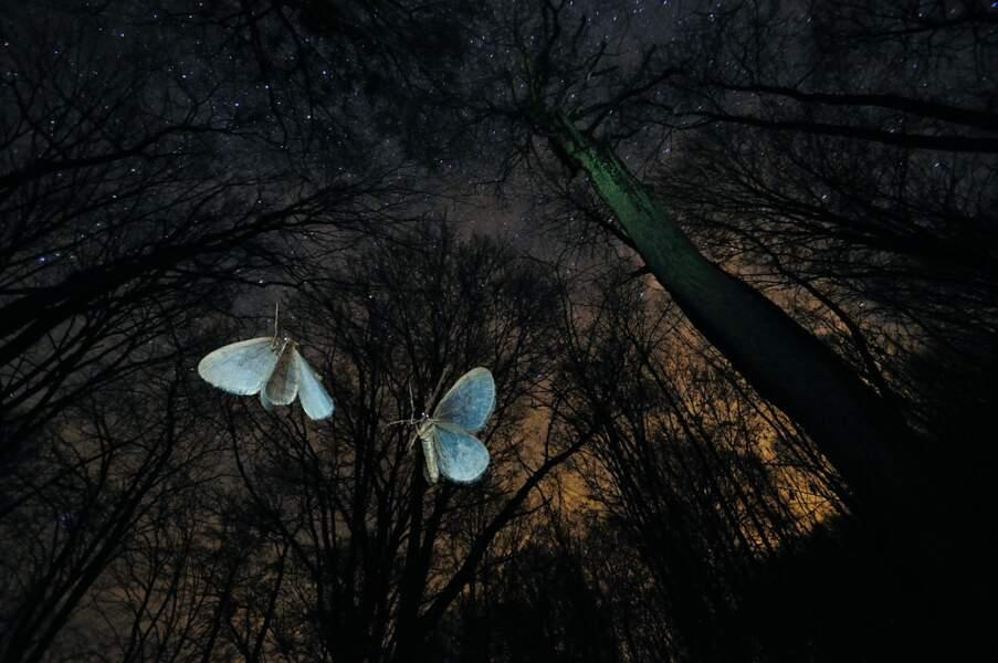 """Les ailes du désir / Imre Potyó (Hongrie), finaliste """"comportement : invertébrés"""""""