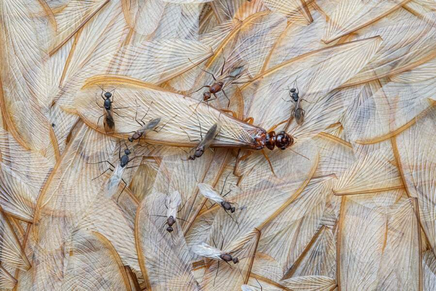 Perdre des ailes