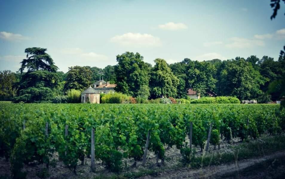 Vignes en Gironde, par la GEOnaute Clementine