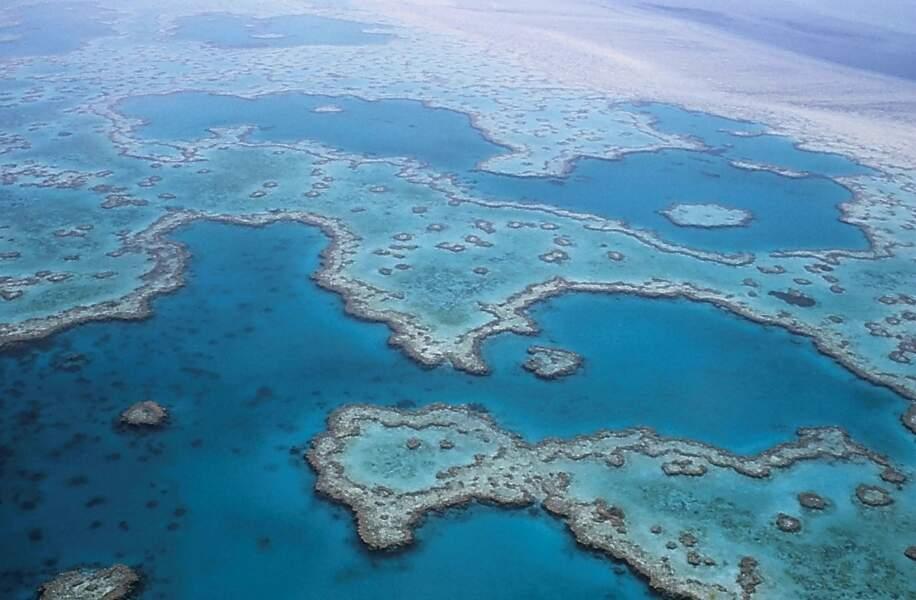 7e spot: La grande barrière de corail en Australie