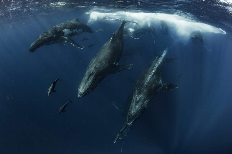 Course de baleines