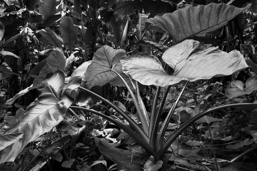 Nid de feuilles