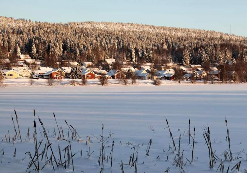 Massettes à larges feuilles, en Suède, par Siv Domeij / Communauté GEO