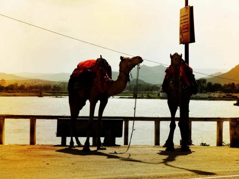 Photo prise à Udaipur (Rajasthan/Inde) par le GEOnaute : sharlen