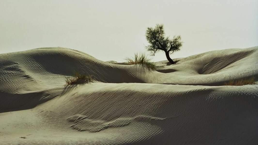 Photo prise en Tunisie par le GEOnaute : arobart
