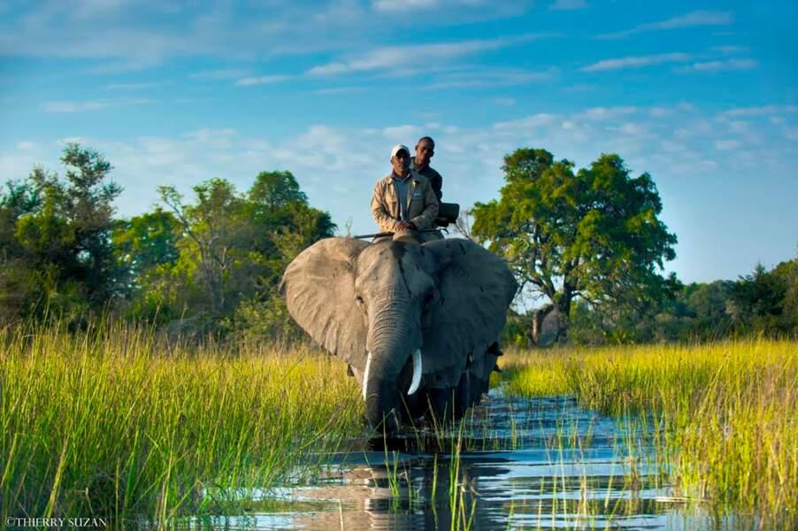 À dos d'éléphant