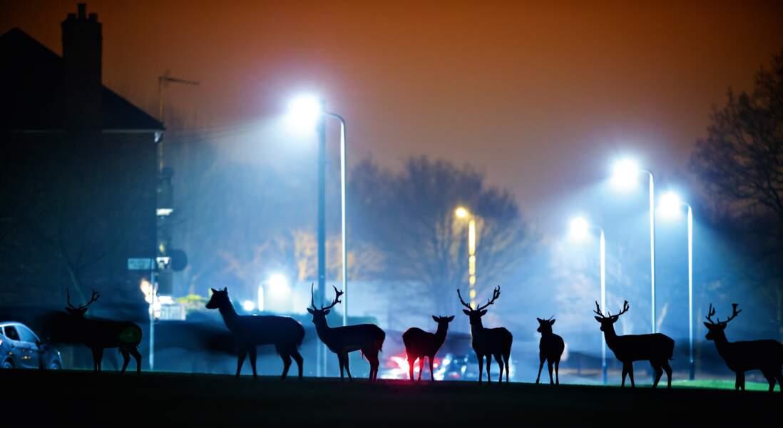 Brentwood, Royaume-Uni : un insolite rendez-vous nocturne