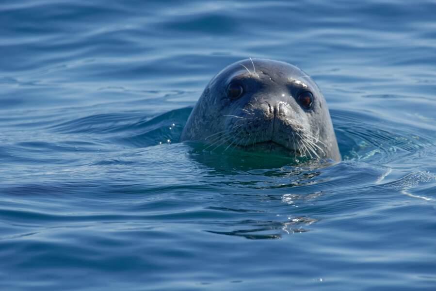 Le phoque-moine est un habitant des mers chaudes