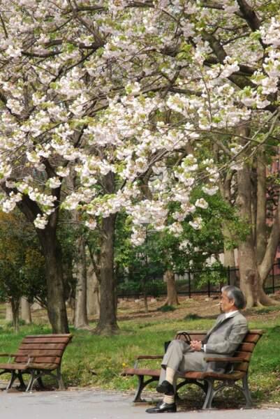 Dans les jardins du palais impérial, Tokyo