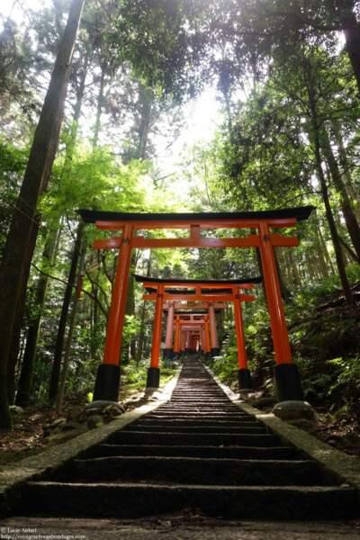 Japon - Kyoto, entre modernité et tradition