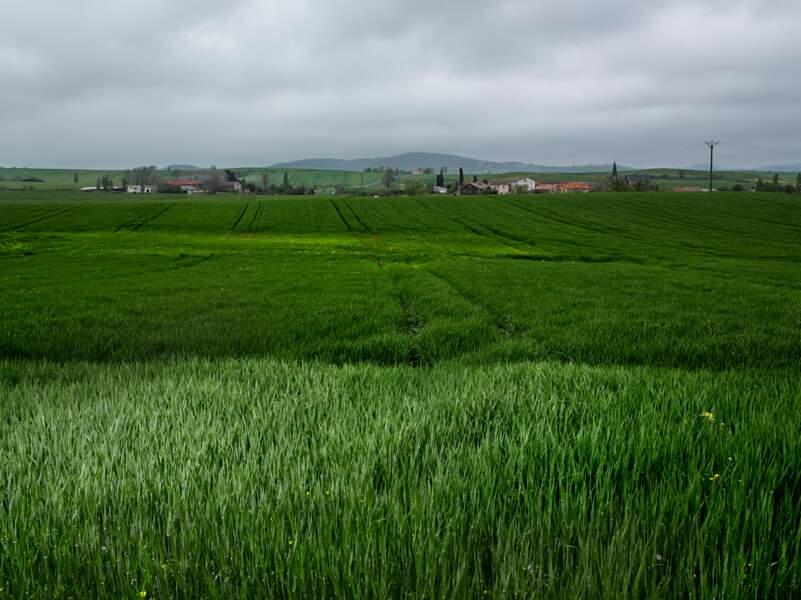 Entre Belmont-sur-Rance et le croisement de la D 32 et D 999