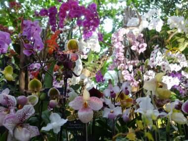 Orchidées à foison au Jardin des Plantes de Paris