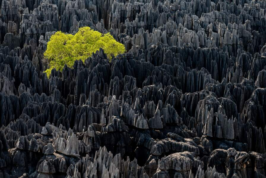 Tsingy de Bemaraha, région de Morondava, Madagascar