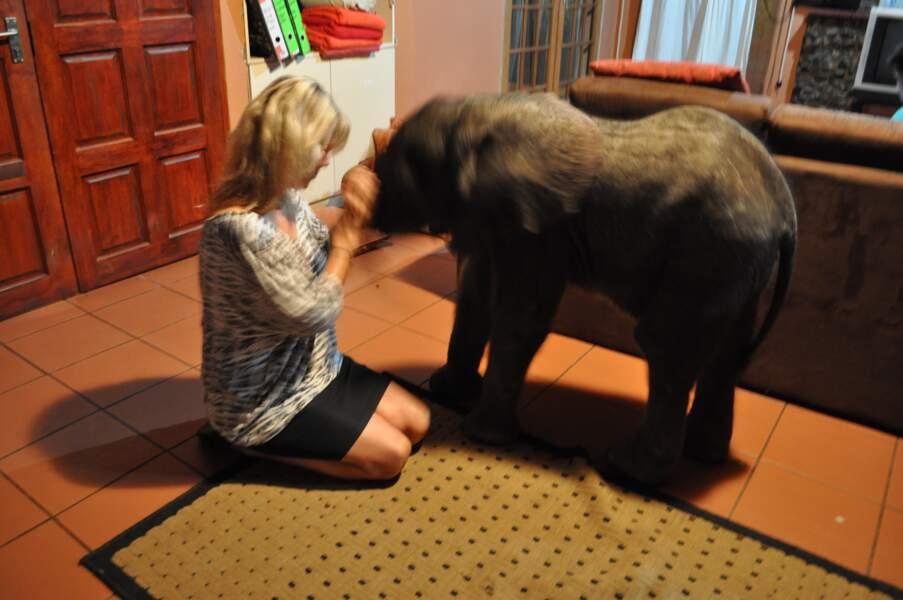 Un éléphant dans la cuisine... et le salon